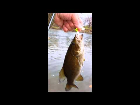 Fall smallmouth bass Free Fishing Video on  Species  by WillCFish Tips and Tricks.
