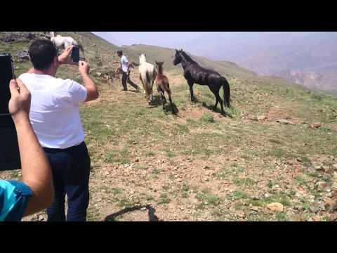Ordubad Gəmiqaya Atlarin döyüşü