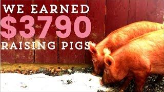 Make Money with Pastured Pigs