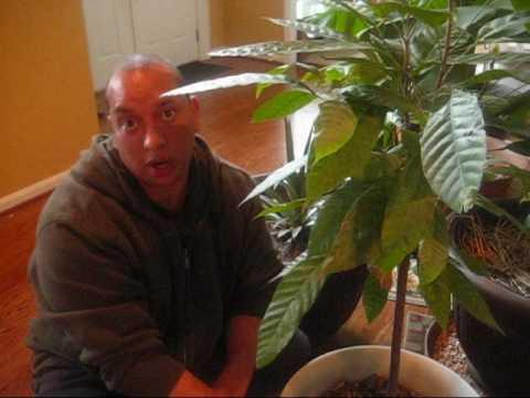 Growing Fruit Trees Indoors