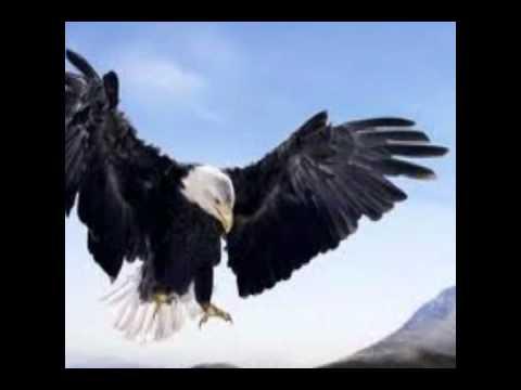 Reflexión #2..una historia.. El águila joven