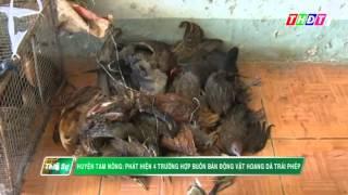 THDT - Nhiều động vật hoang dã được bày bán tại chợ Tràm Chim