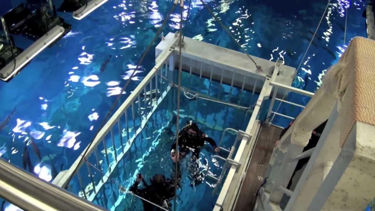 Imovie Trailer Dubai Mall And Underwater Zoo Youtube