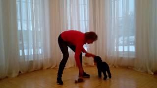Edukacyjne zabawy z psem - POZYTYWNE SZKOLENIE PSÓW