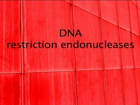 DNA   restriction enzymes