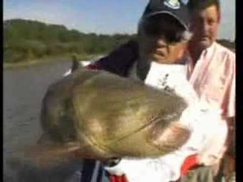 Pesca de surubi en Puerto Yeruá ER Argentina