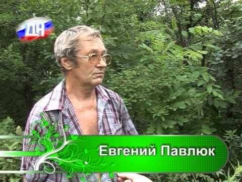 24 07 13 Садовод садоводу   КАШТАН