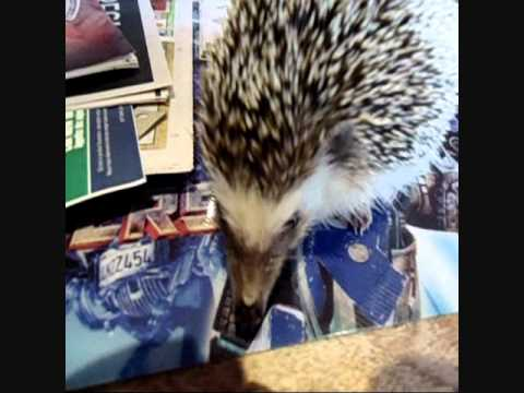 Baby Girl the hedgehog peeing on Optimus Prime