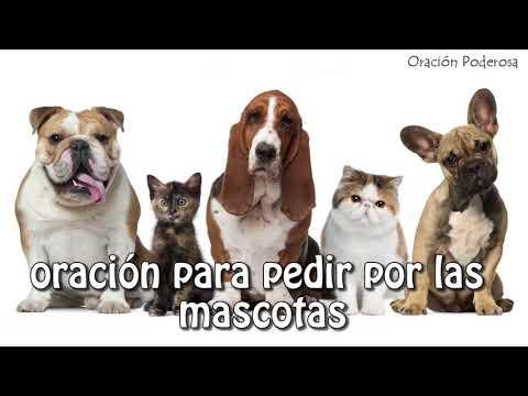 San Roque, oración para pedir por las mascotas - Extravios, enfermedades, robos, proteccion