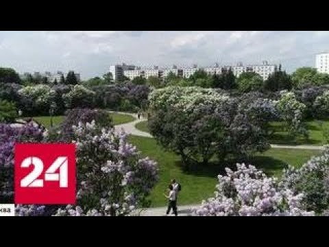 Цветы за решеткой или раздача луковиц: как бороться с ворами в полисадниках - Россия 24