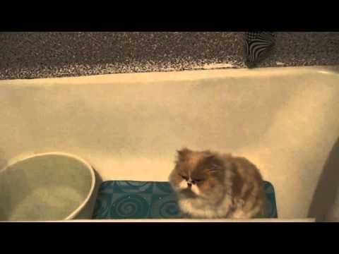 Кот Тоша и таз с водой