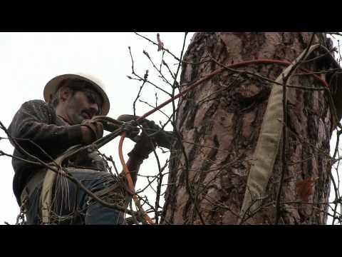 Tree Service Grants Pass: Liberty Tree Enterprises LLC