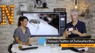 Tony & Chelsea LIVE: Instant Macro Photo & Portfolio Reviews, Photo News