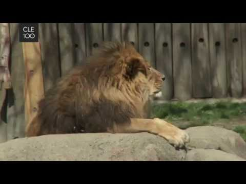 Cleveland Foundation Day at Cleveland Metroparks Zoo