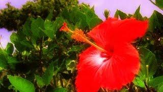 城 南海 花 すべての人の心に花を Hana Kizuki Minami