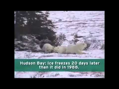 Global Warming Effects in the Arctic