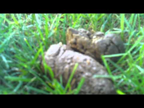 White Worms In Dog Feces Pictures