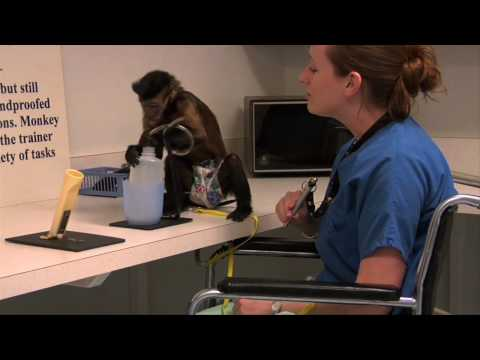 Helping Hands: Matching Capuchins with Those in Need
