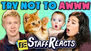 TRY NOT TO AWWW CHALLENGE (ft. FBE Staff)