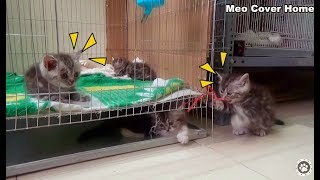 All Kittens Playing Outsite Cage So Funny  | Kittens Funny 2018 | Meo Cover Home