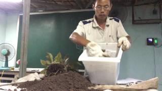 Hướng dẫn kỹ thuật trồng và chăm sóc cây trong bồn chậu