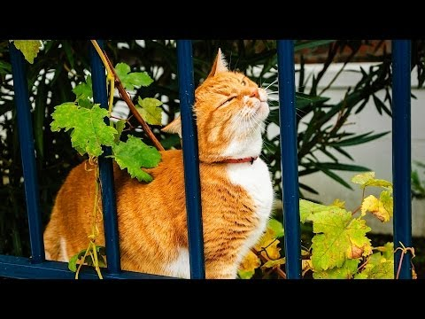 Why Cats Rub Their Heads on Things | Cat Care