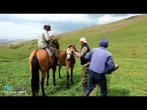 Казахские кони!
