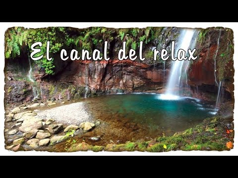 SONIDOS RELAJANTES DE LA NATURALEZA, AGUA Y PAJARILLOS, RELAXING NATURE SOUNDS WITH WATER AND BIRDS