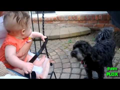 Babies Laughing Hysterically at Dogs Compilation 2012 HD]