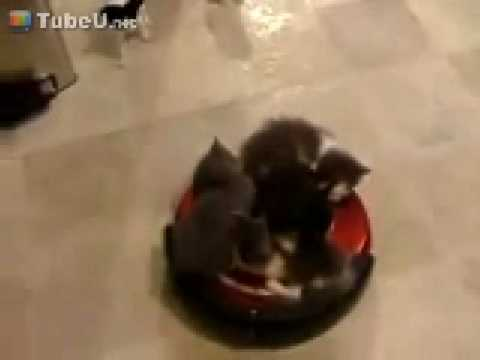 Kittens Riding a Roomba