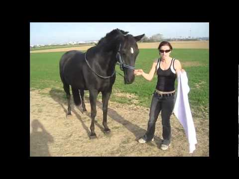 How to teach your horse FIVE TRICKS...count, smile, grab that, follow, backwards