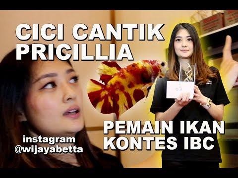 Download  CICI CANTIK PENGHOBBIES  DAN PEMAIN KONTES IKAN CUPANG Gratis, download lagu terbaru