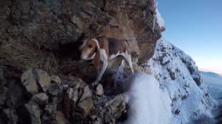 Dog rescue attempt, Part 1
