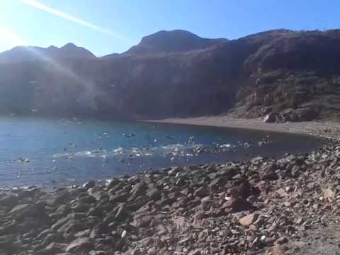 gaviotas y pelícanos comiendo en el paraje Guaymas, Sonora