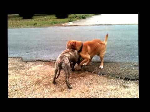 Gay Dogs video
