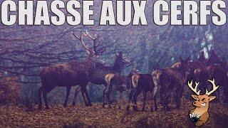 Chasse aux Cerfs - Un Grand Face à Face !