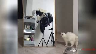 Cutest Cats and Kittens video compilation 2019   Funny Videos Cat