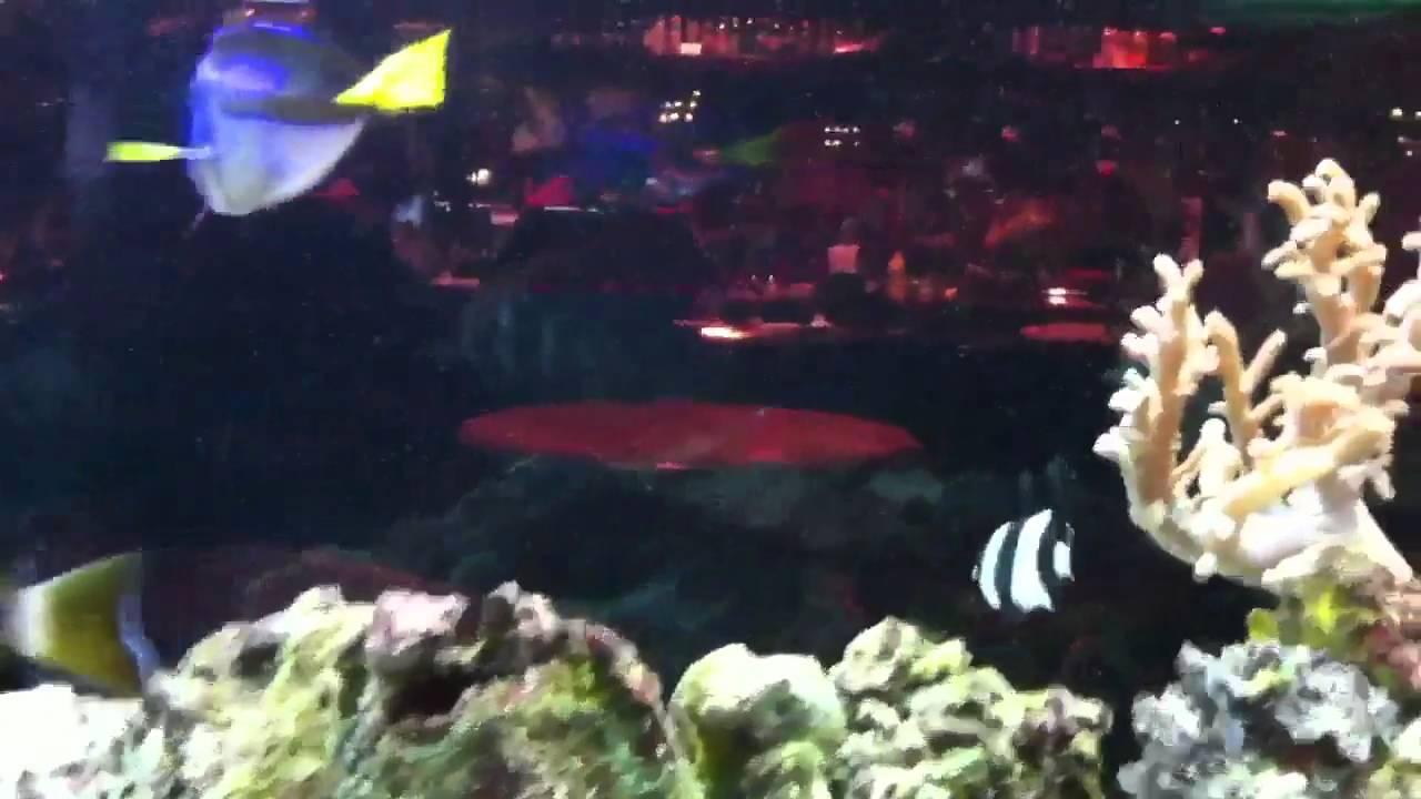 St Louis Aquarium Restaurant 2 Youtube