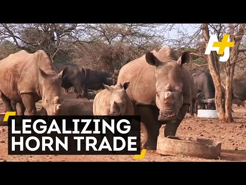 South Africa And Kenya Differ On How To Save Rhinos From Poachers