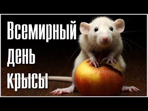 http://i.ytimg.com/vi/vUDER1deaX4/hqdefault.jpg