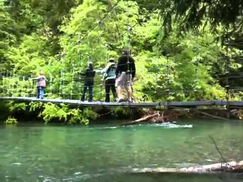 Bridge over Ohanapescosh Video