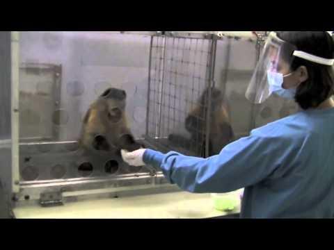 No es justo! - Experimento con monos