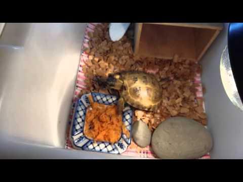Чем зимой в домашних условиях кормить сухопутную черепаху в домашних условиях
