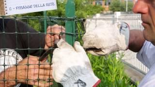 Rete da recinzione in plastica - Installazione per l'hobbista