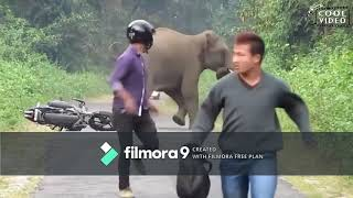 Funny animals attack on humans 2019