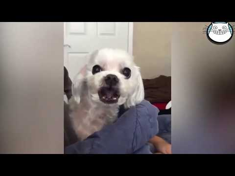 Silly Kitties | Funny Cats And Dogs | Cute Pets ♥