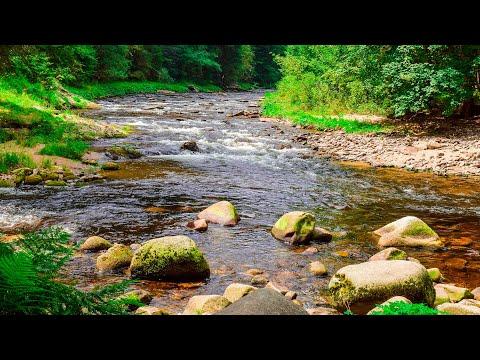 Звуки Природы   Шум Реки и Лесные птицы - 2 часа