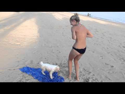 un perro casi deja desnuda a una chica en la playa