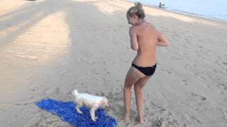 Շնիկը փորձում է տանել աղջկա լողազգեստը