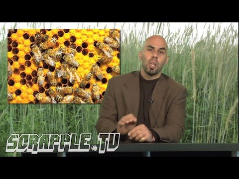 Honey Bees [Open Resource w/ Oskar Castro]